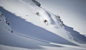 Endless Powder im Freeridepark Saalbach Hinterglemm © saalbach.com